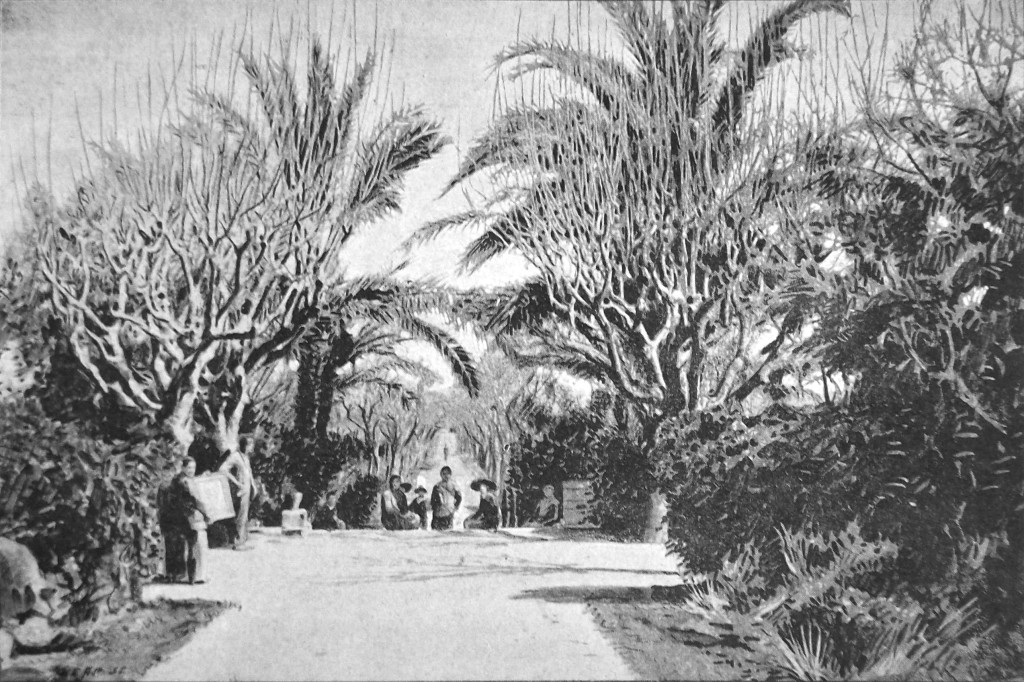 A wide, lush, tree-lined walkway under a sunny sky.